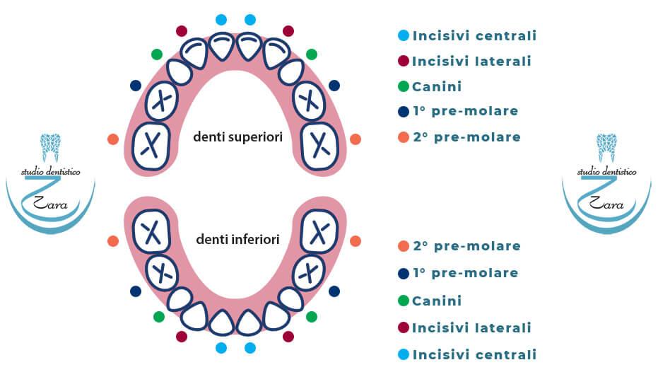 Quali sono i Denti decidui